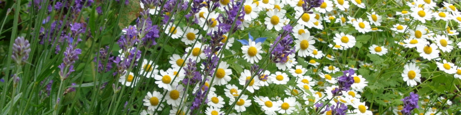 Contact tuinontwerp groningen friesland en drenthe for Wat kost een tuinontwerp