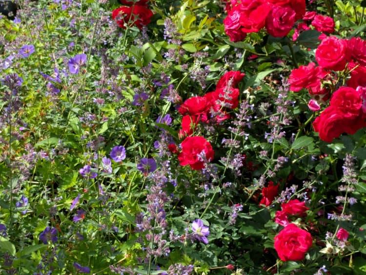 kleurrijke-tuin-aan-het-water-nietap-6