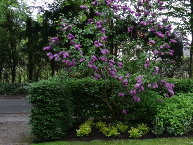 natuurlijke-tuin-haren-8