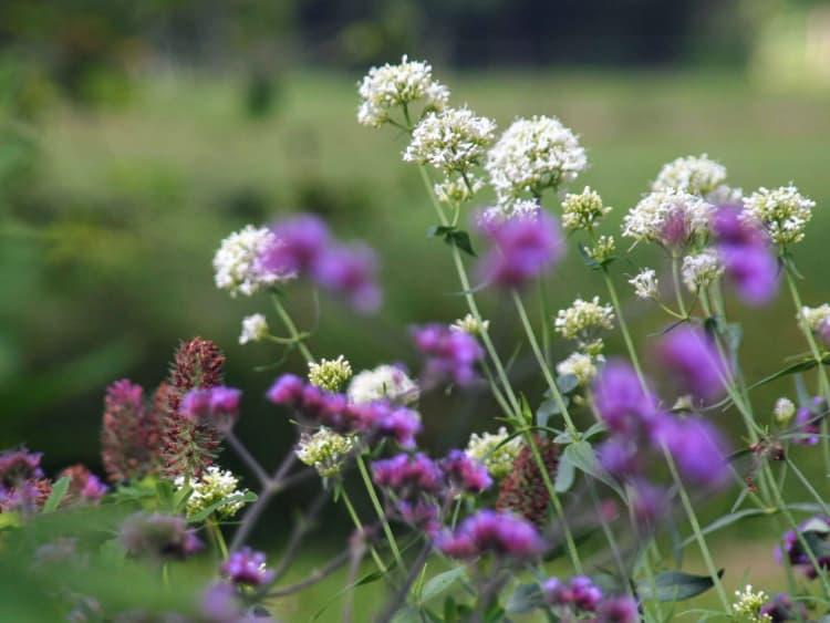 natuurlijke-tuin-jonkersvaart-6