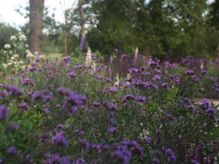 natuurlijke-tuin-jonkersvaart-8